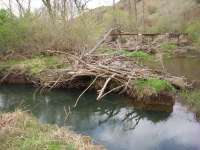La CHD mejora la continuidad longitudinal de los ríos de la cuenca con la retirada de 45 obstáculos transversales