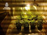 Detienen a un joven en Mérida por cultivar marihuana en una habitación acondicionada para ello en su domicilio