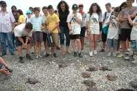 M.La Junta libera 156 ejemplares de tortuga boba en las playas del Parque Natural Cabo de Gata-Níjar