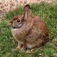 La Consejería de Presidencia autoriza la caza de conejo para evitar daños en la agricultura