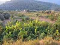 Decomisan 252 plantas de marihuana en un terreno de Tarragona