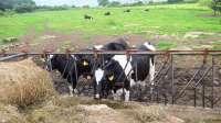 UU.AA., XX.AA. y SLG urgen por carta al conselleiro de Medio Rural que convoque la mesa de la leche