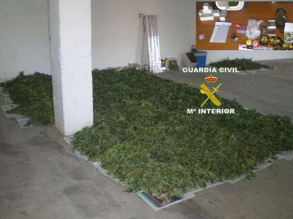 Desmantelado un punto de venta y cultivo de marihuana en Montehermoso (Cáceres)