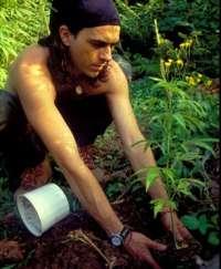 Nace en Avilés una nueva agrupación de cultivadores y consumidores de cannabis