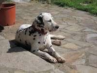Las adopciones en el Centro de Recogida de animales de la Diputación de Huesca aumentan un 20%
