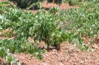 La empresa Biodoñana prevé la producción de 100.000 botellas de vino ecológico entre 2012 y 2013