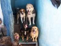 La Protectora supera los 700 servicios en 2011, casi un 3% más que en 2010, y acoge sobre todo a perros y gatos