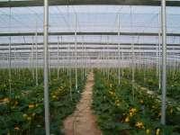 Agricultura lidera un proyecto de la Unión Europea para aumentar la competitividad de la producción en invernadero Fi