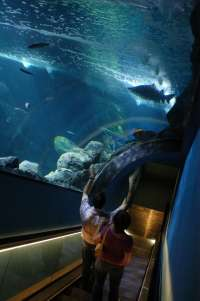 El Acuario de Gijón imparte un curso sobre mantenimiento y gestión de tiburones