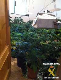 Detenido un vecino tras intervenirle 64 plantas de marihuana y un semillero con 185 plantas más