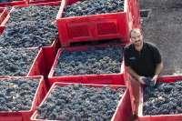 Bodegas Murviedro aumenta un 15% su volumen de producción y facturación en 2011