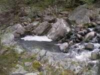 El Club de Pescadores de Arenas (Ávila) critica que la limpieza de la depuradora ha contaminado el río Arenal