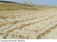 El PSOE propone al Gobierno de Rajoy aprobar un decreto ley con medidas urgentes contra la sequía