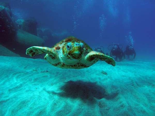 El Cofib liberará este sábado seis tortugas mediterráneas en el Parque Natural de Mondragó