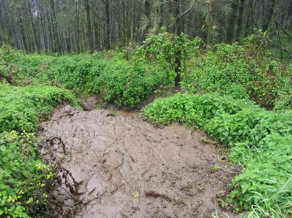 Ecologistas alertan de vertidos de purines en Navia y piden una investigación