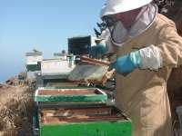 Los apicultores de Tenerife prevén una baja producción de mieles debido a la ausencia de lluvias