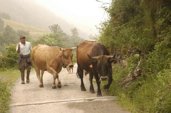 La Unión de Ganaderos y Agricultores de C-LM advierte del riesgo de desaparición del sector caprino en la región