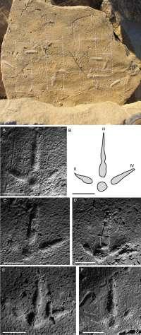 Descubierta una huella fósil de un ave del Terciario bautizada como 'Uvaichnites riojana'