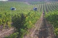 La Junta convoca las ayudas a los planes de Reestructuración y Reconversión de Viñedo 2012-13