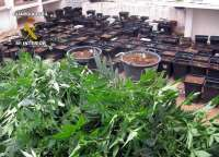 Detenidos tres vecinos de Águilas con 700 plantas de marihuana en un invernadero clandestino