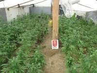 Policía Foral descubre en Esteribar un invernadero con 437 plantas de marihuana y detiene a su propietario