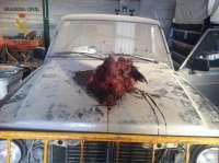 Detenidas tres personas por robar en una parcela de Yepes (Toledo) y matar un jabalí utilizando picos y hachas