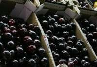 La I Feria de la Cereza ensalza este producto local en Albalate del Arzobispo