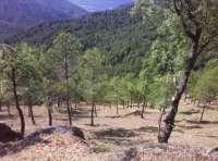 Ecologistas culpan a la falta de gestión y prevención el alto número de hectáreas quemadas