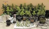 Detenidas dos personas en Caudete (Albacete) tras encontrar 51 plantas de marihuana en su domicilio