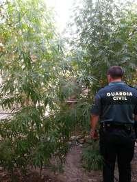 La Guardia Civil se incauta de 50 kilogramos de marihuana y detiene a cuatro personas