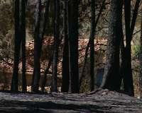 Imputan a un vecino de Lugo como presunto autor de un incendio forestal originado por negligencia en un desbroce