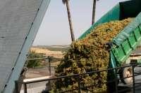 Barbadillo inicia su vendimia 2012 con la previsión de recolectar siete millones de kilos de uva Palomino