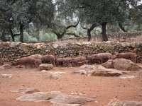 Herranz lanza un mensaje de tranquilidad ante las restricciones de Argentina en las importaciones de porcino