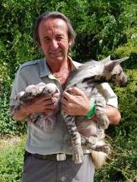 Nacen tres hienas rayadas en el zoológico Mundopark de Guillena