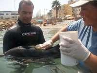 Promar atiende en una playa de Roquetas de Mar a un delfín listado joven con dificultades para nadar