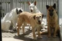 Can Pastilla acoge este sábado un gran festival canino con mercadillo y concursos a beneficio de los perros de Esporles
