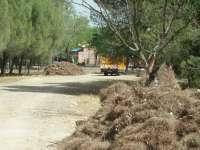 Ayuntamiento limpia por segundo año consecutivo seis hectáreas de pinares entre el Parque Santa Elena y Fibes