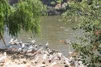 El Gobierno impulsará obras de emergencia para aportar recursos hídricos del Tajo a la zona regable del Alberche