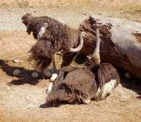 Terra Natura acoge por primera vez el nacimiento en cautividad de tres avestruces en sus instalaciones