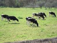 La mesa del sector lácteo reúne este martes a industria, productores y distribución