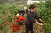 Cáritas atiende en La Rioja Baja durante el mes de agosto a entre el 40 y el 50% más de temporeros que en 2011