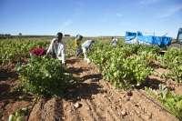 Comienza la vendimia de las variedades tintas de Merlot y Syrah en la Cooperativa Longares