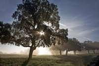 Medio Ambiente destina más de 1,2 millones para desarrollo sostenible en espacios y zonas de reproducción protegidos