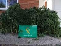 Detenido en Las Merindades (Burgos) un joven de 30 años por cultivo de 17 plantas de marihuana