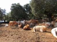 Asaja pide la vuelta de los ganaderos al monte para prevenir los incendios forestales