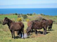 Parlamentarios en Defensa de Animales preguntan al Gobierno si endurecerá penas para los cepos en caballos