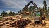 Ence logra triplicar la producción de madera gracias a la innovación
