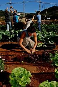 El Mercadillo de Tegueste (Tenerife) suministrará productos ecológicos al Colegio Teófilo Pérez