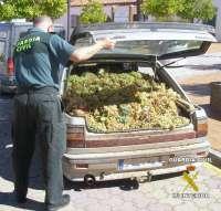 La Guardia Civil recupera 4.000 kilos de uva robada en la provincia de Badajoz e imputa a once personas