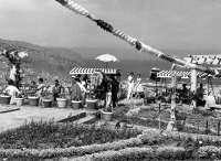 Filmoteca Canaria presenta un catálogo de rodajes hechos en las islas entre 1951 y 1970